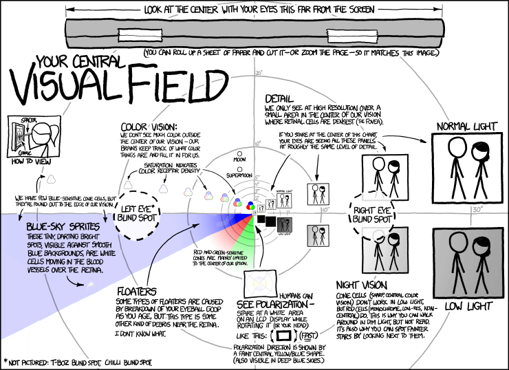 Central Visual Field